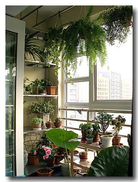 与客厅,主卧相邻的阳台是主阳台