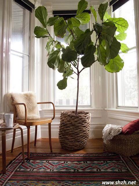 阳台里的休闲阳光房图片